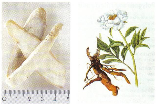 Paeoniae lactiflorae radix, Bai ShaoYao
